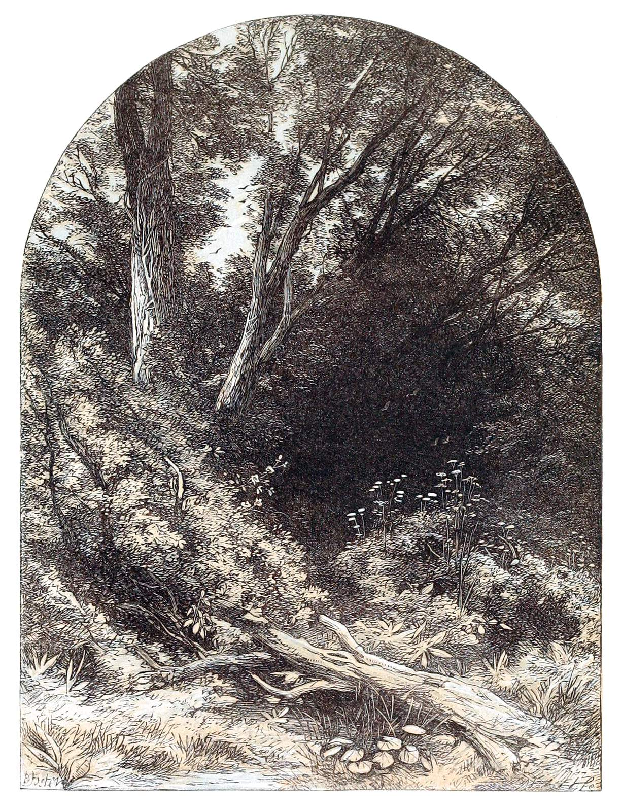 Etching of densely-packed woods displayed in an arch, a portal to elsewhere.
